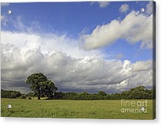 English Oak Under Stormy Skies Acrylic Print