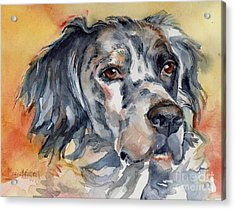 English Setter Portrait Acrylic Print