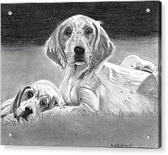English Setter Puppies Dog Acrylic Print by Olde Time  Mercantile