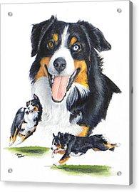 English Shepherd Acrylic Print