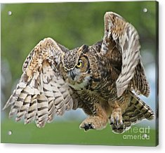 Acrylic Print featuring the photograph Engulf by Heather King