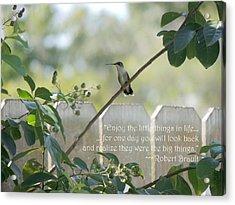 Hummingbird On Crepe Myrtle Acrylic Print