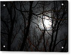 Entangled In The Moonlight Acrylic Print by Judy Powell
