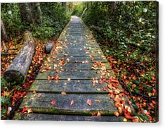 Enter The Woods - Retzer Nature Center - Waukesha Acrylic Print by Jennifer Rondinelli Reilly - Fine Art Photography
