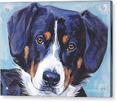 Entlebucher Mountain Dog Acrylic Print by Lee Ann Shepard