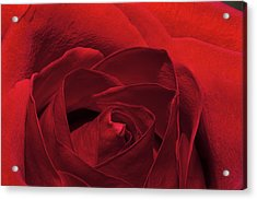 Enveloped In Red Acrylic Print
