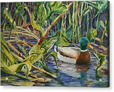 Acrylic Print featuring the painting Environmentally Sound - Mallard Duck by Roxanne Tobaison