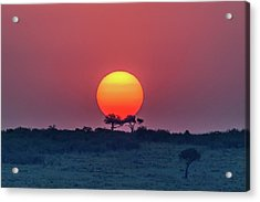 Equatorial Sunset Acrylic Print by Jeffrey C. Sink
