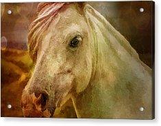 Equine Fantasy Acrylic Print by EricaMaxine  Price