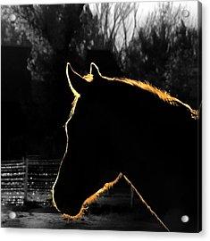 Equine Glow Acrylic Print
