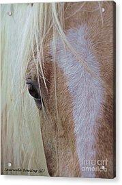 Equine Head Study Acrylic Print by Laurinda Bowling