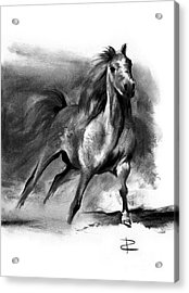 Acrylic Print featuring the drawing Equine II by Paul Davenport
