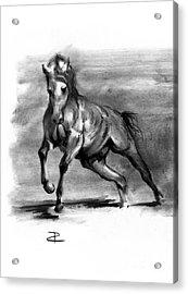 Equine IIi Acrylic Print