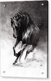 Equine Acrylic Print