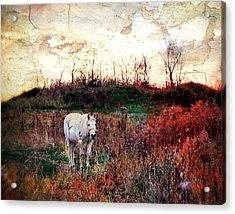 Equine Stare Acrylic Print