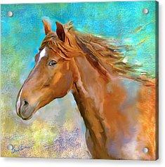Equus 1 Acrylic Print