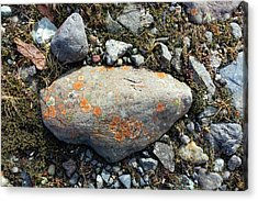 Erratic With Lichens Acrylic Print by Dr Juerg Alean