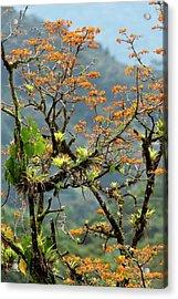 Erythrina Poeppigiana Tree And Epiphytes Acrylic Print