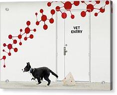Escape At The Vet Acrylic Print