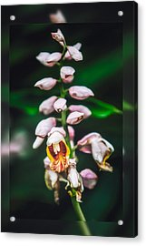 Acrylic Print featuring the photograph Escape by Joshua Minso
