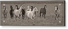 Escapees From A Lineup Acrylic Print by Wes and Dotty Weber
