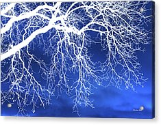 Escaping The Blues Weeping Tree Art Acrylic Print by Christina Rollo