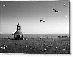 Esplended Gulls Acrylic Print