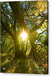 Essence Of Life Acrylic Print by Gem S Visionary