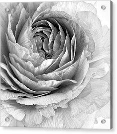 Essence Acrylic Print by Priska Wettstein