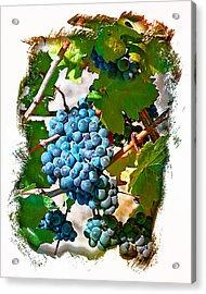 Estate Grown II Acrylic Print by Ken Evans