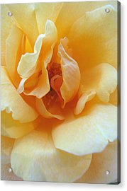 Lightness Of Being - Yellow Rose Macro -floral Art From The Garden Acrylic Print