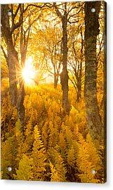 Acrylic Print featuring the photograph Eternal Sunshine by Bernard Chen
