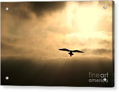 Acrylic Print featuring the photograph Eternal White Light by Polly Peacock