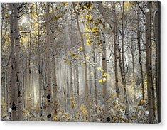 Ethereal Autumn Acrylic Print by Leland D Howard
