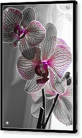 Ethereal Orchid Acrylic Print