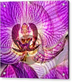 Ethereal Orchid By Sharon Cummings Acrylic Print by Sharon Cummings