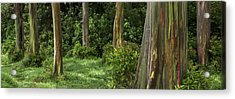 Eucalyptus Dream Acrylic Print