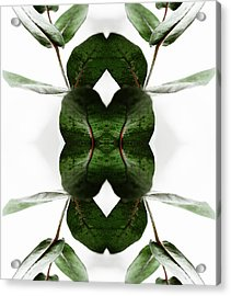 Eucalyptus Leaves Acrylic Print
