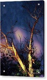 Eucalyptus Night Tree Acrylic Print by Petros Yiannakas