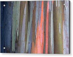 Eucalyptus Tree Bark Acrylic Print by Karon Melillo DeVega