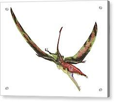 Eudimorphodon Acrylic Print