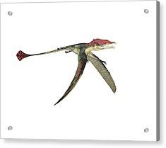 Eudimorphodon Pterosaur Acrylic Print