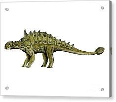Euoplocephalus Dinosaur Acrylic Print