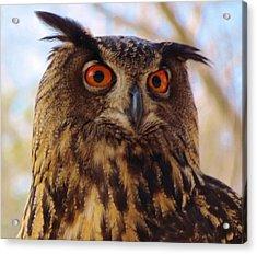 Acrylic Print featuring the photograph Eurasian Eagle Owl by Cynthia Guinn