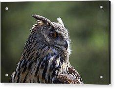 Eurasian Eagle-owl Acrylic Print by Garry Gay