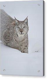 Eurasian Lynx Acrylic Print by Andy Astbury