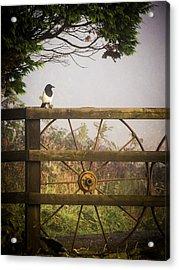 Eurasian Magpie In Morning Mist Acrylic Print