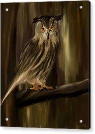 Eurasian Owl Look Acrylic Print by Lourry Legarde