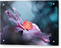 Even Flowers Have Stories To Tell Acrylic Print by Fabien Bravin