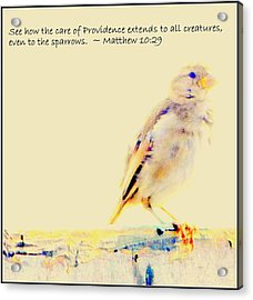 Even Sparrows Matter Acrylic Print by Kathy Barney